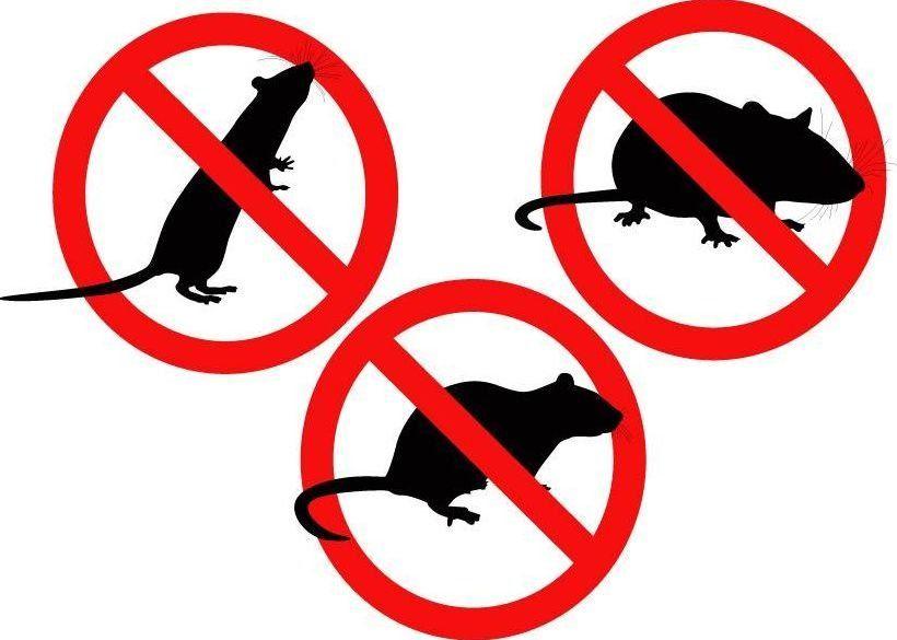 Quel piège à rat choisir ?
